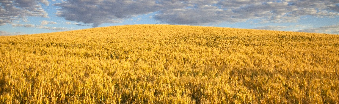 Tri-Cities-real-estate-wheat-fields